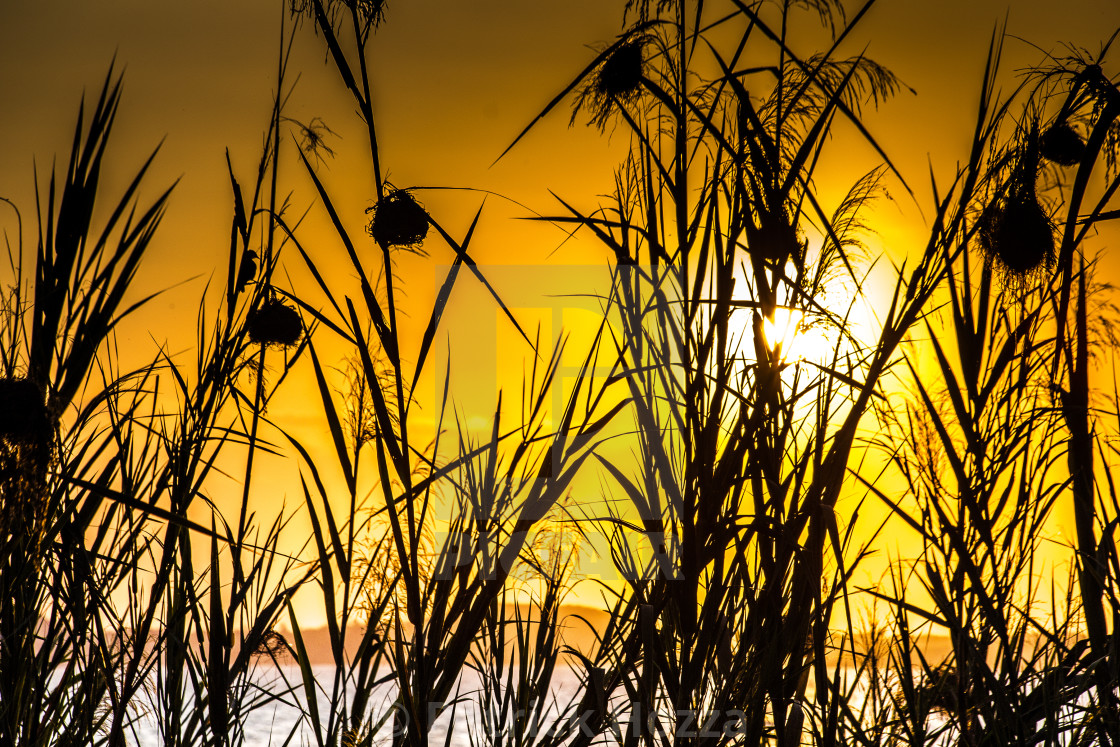 """Sunset from shores of Lake Victoria"" stock image"