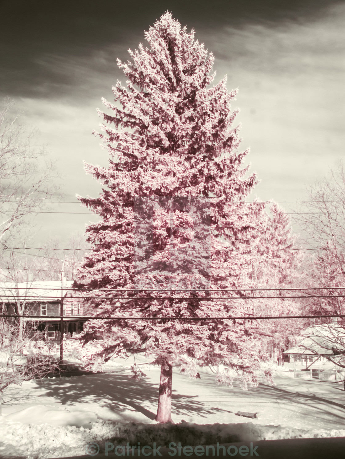 """Tree in Infra-red"" stock image"