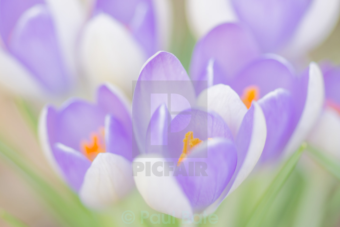 """Spring Flowers"" stock image"