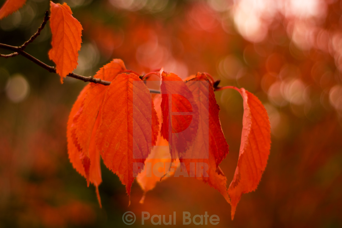 """Shades Of Autumn"" stock image"