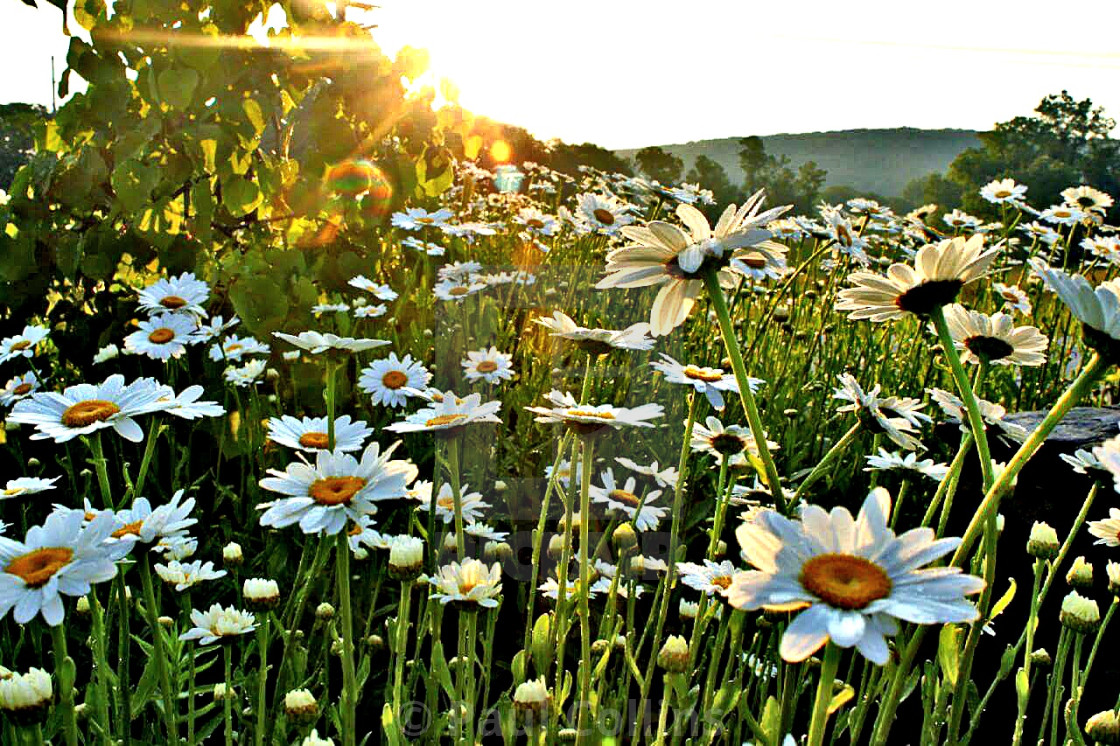 Field of wild flowers in the morning. - License, download or print for  £31.00 | Photos | Picfair