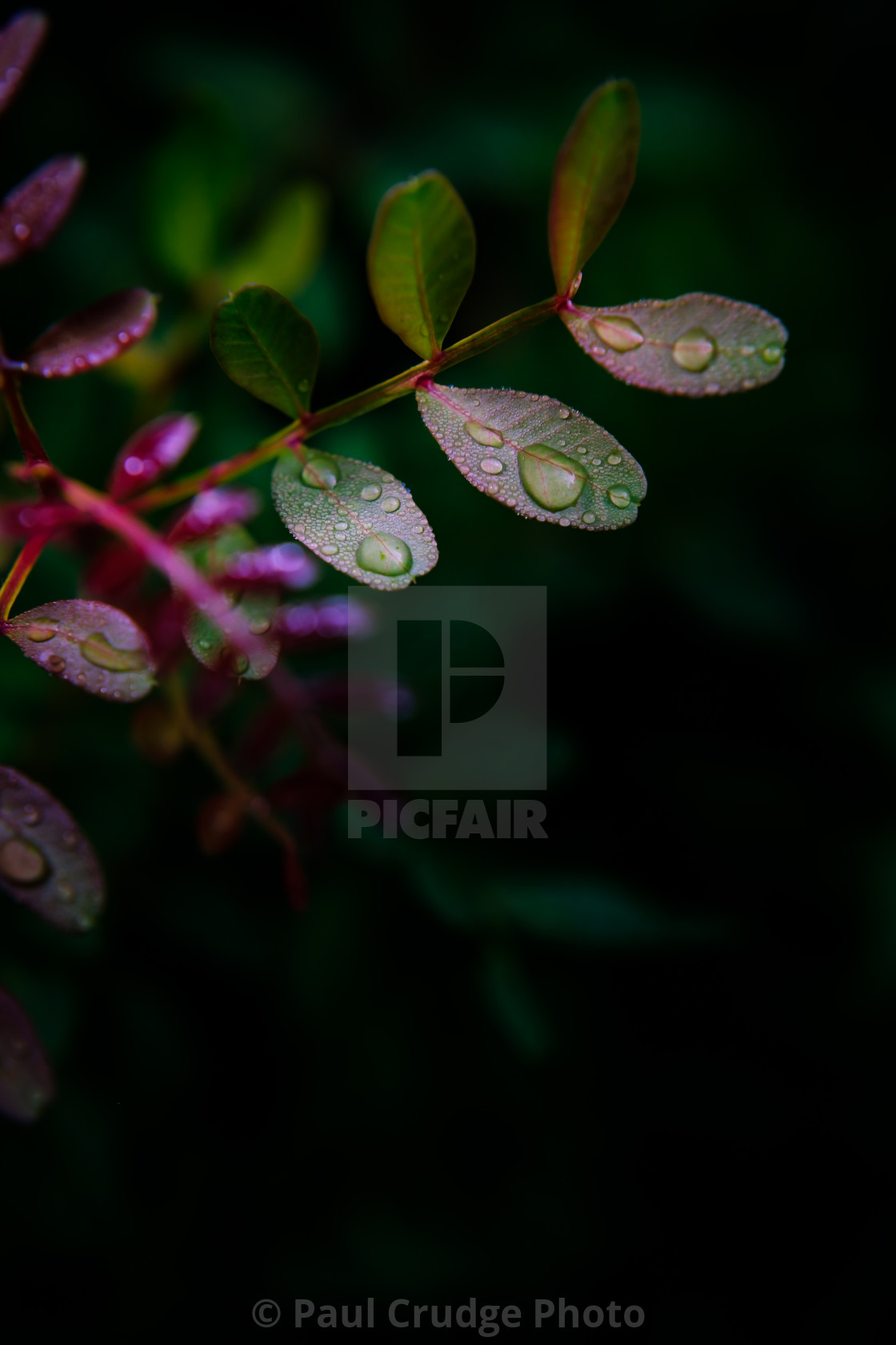 """Drops"" stock image"
