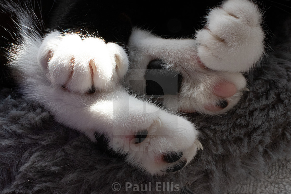 """Cat's Paws"" stock image"