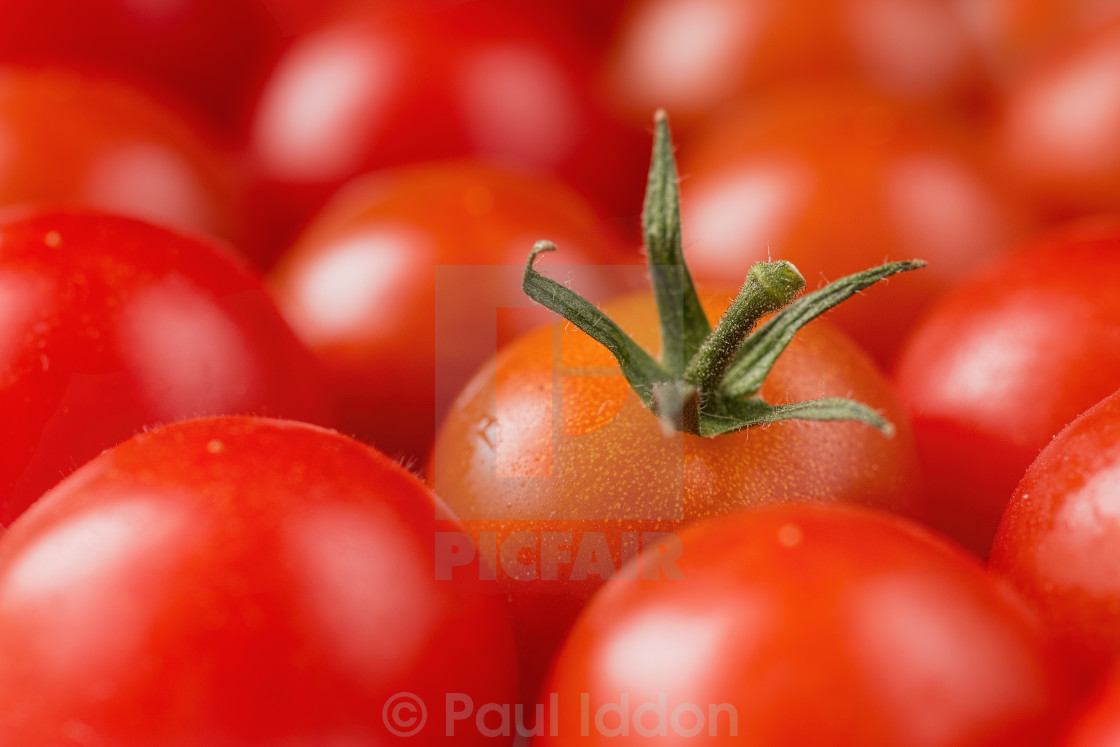 """Pick a tomato, any tomato..."" stock image"