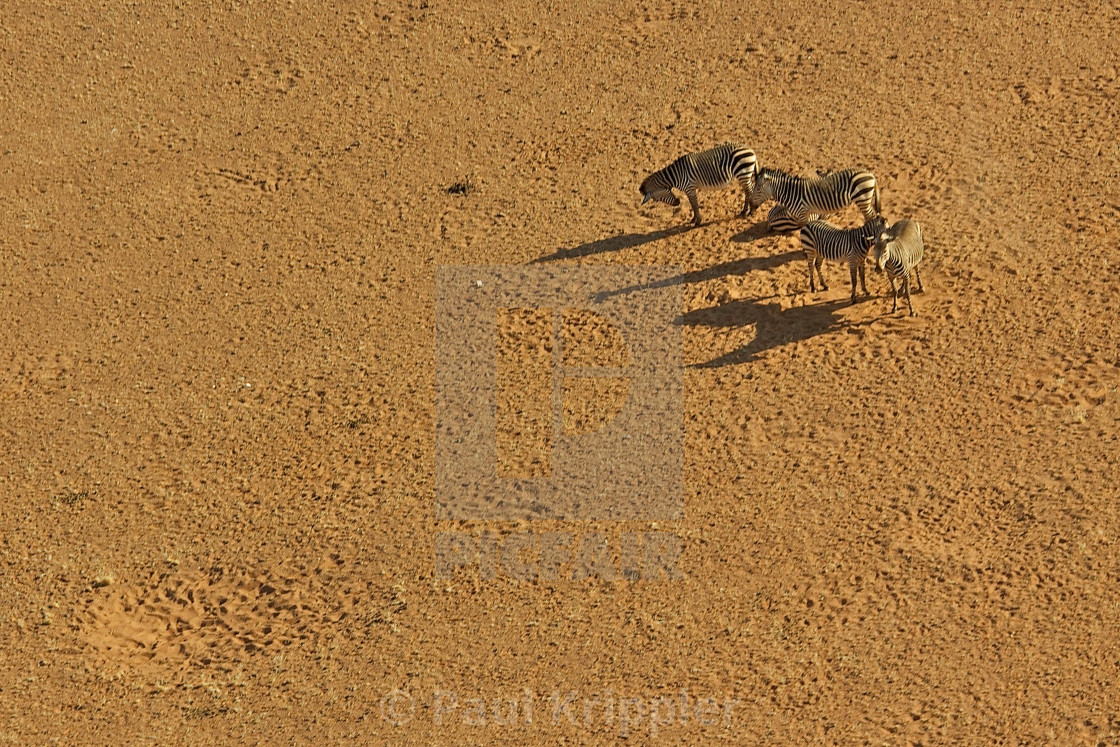 """Zebras from the air"" stock image"