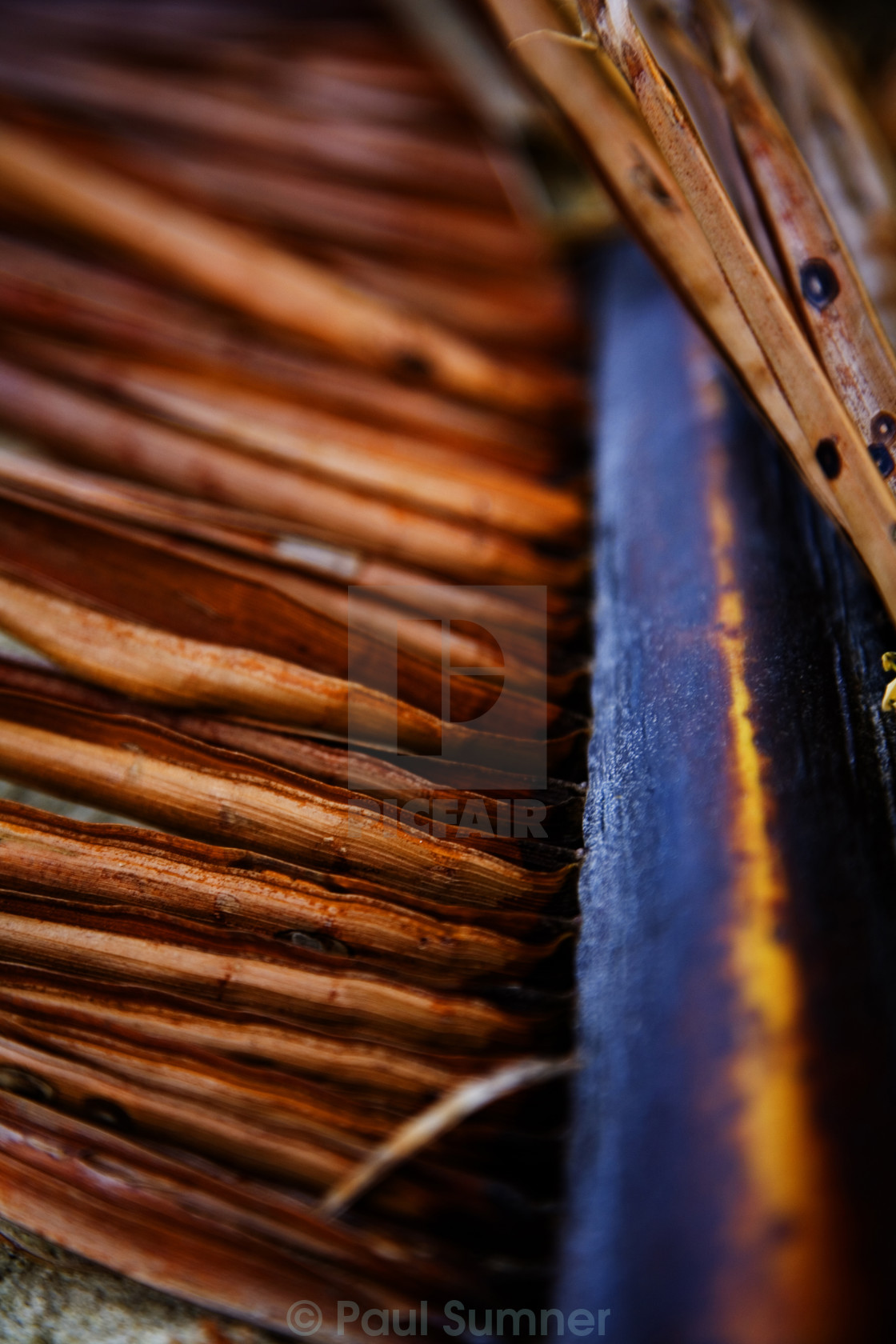 """brown leaf"" stock image"