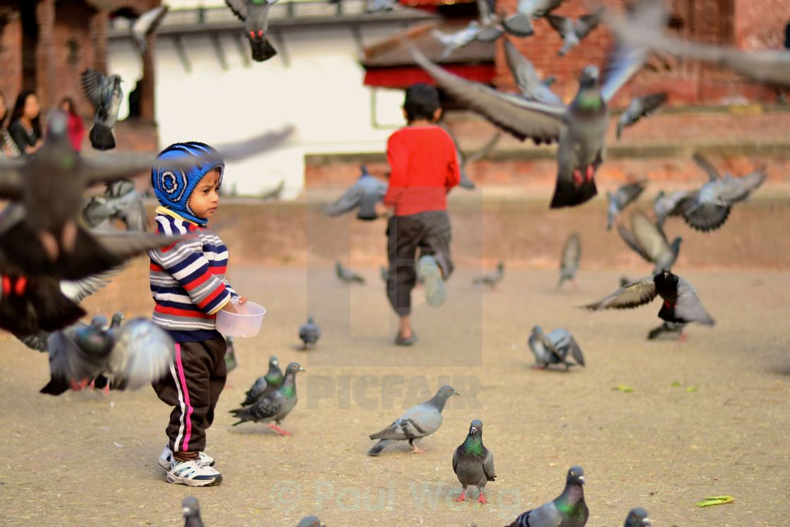 """Durbar Birds"" stock image"