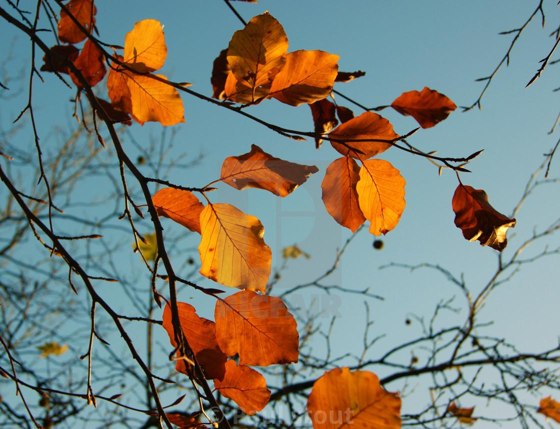"""Autumn Leaves."" stock image"