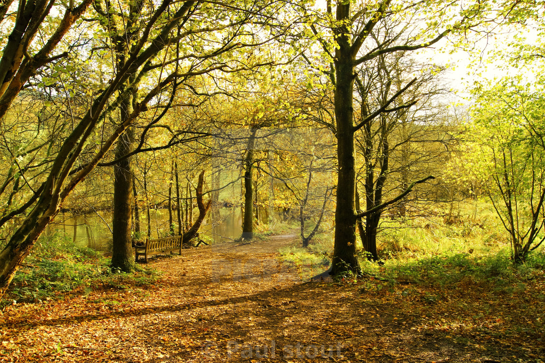 """Woodland Trail."" stock image"