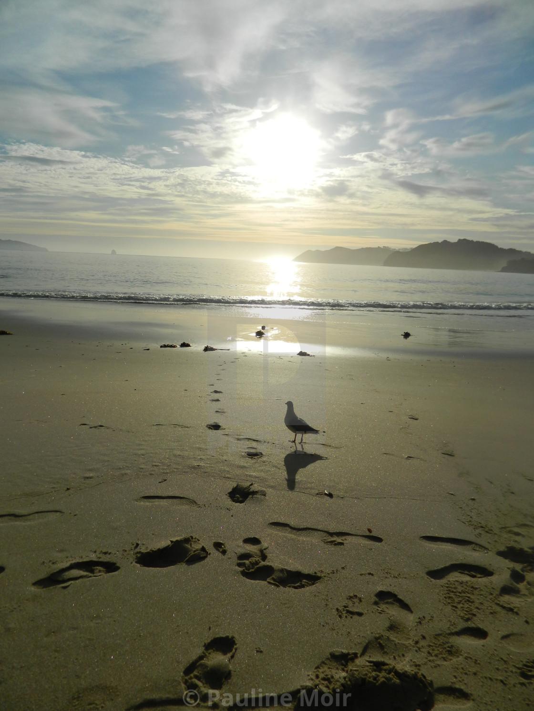 """""""Sun, sea, sand and seagull"""" stock image"""