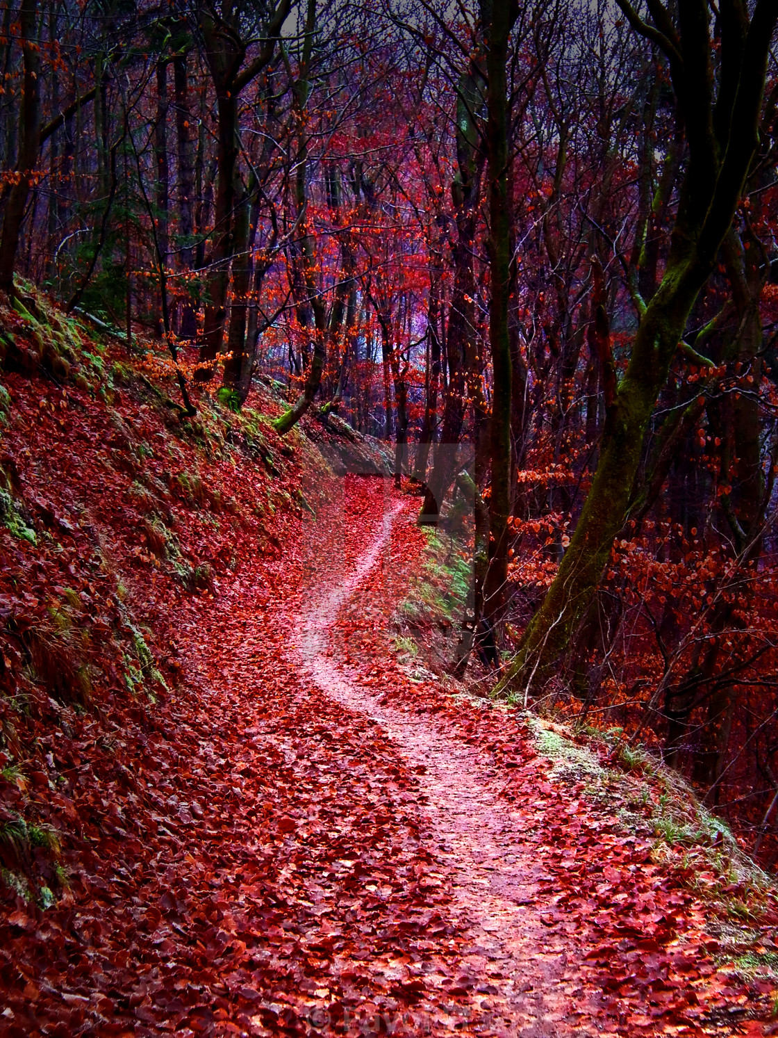 """Forest path"" stock image"