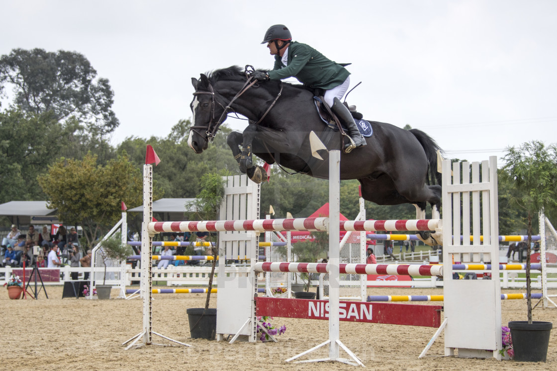 """showjumping"" stock image"