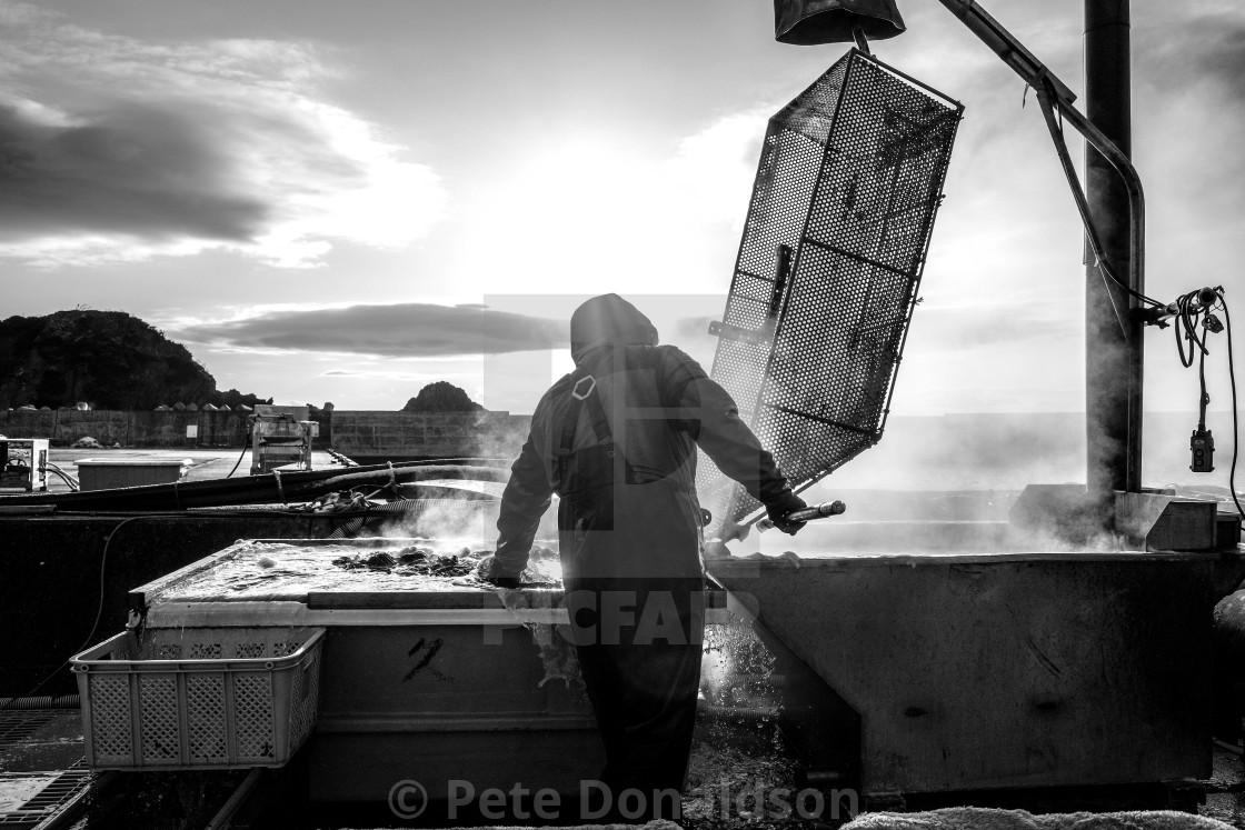 """Seaweed farming, Ishinomaki - boiling weed"" stock image"