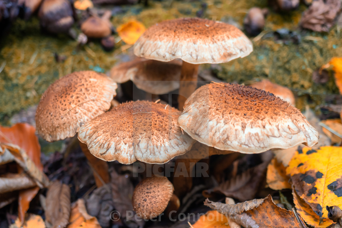 """A fungi in the woods"" stock image"