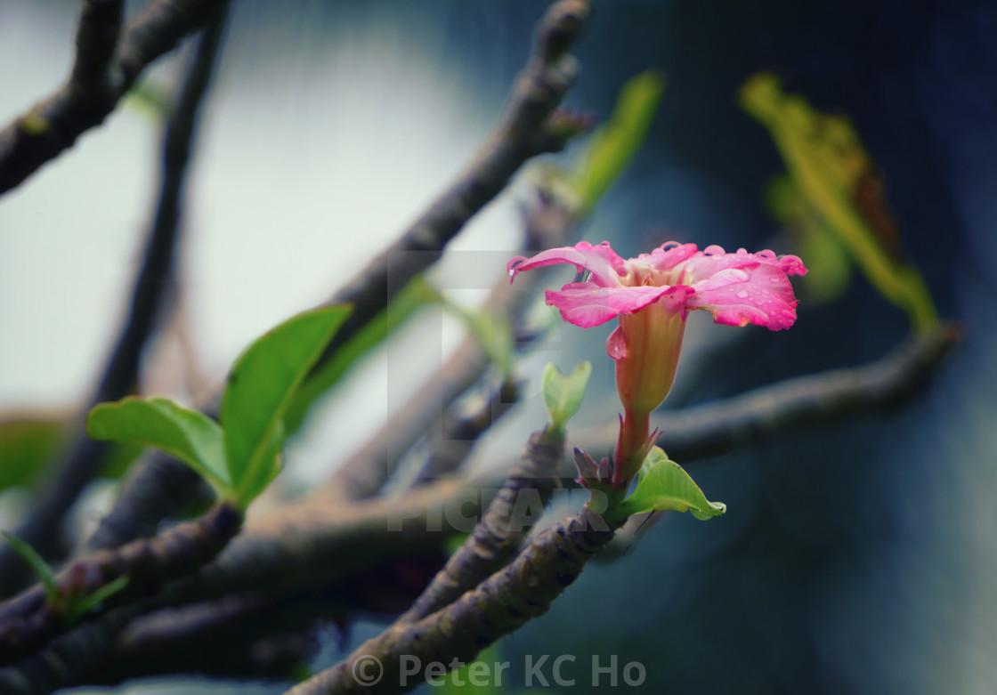 """Life Is a Flower: Travel Bangkok - Thailand"" stock image"