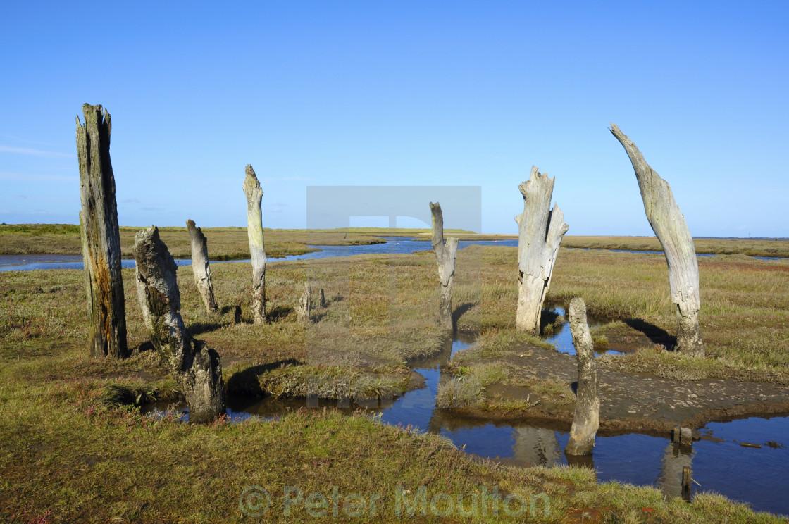 """Weathered Posts, Norfolk"" stock image"
