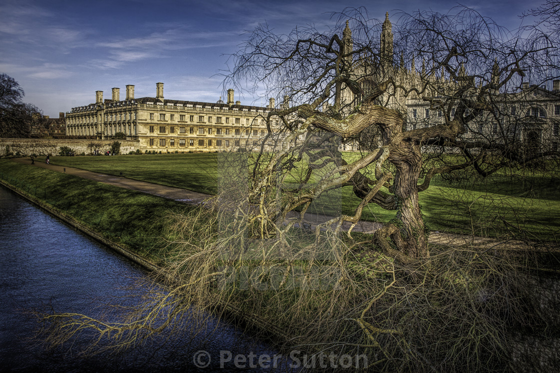 """""""A Tree By The River"""" stock image"""