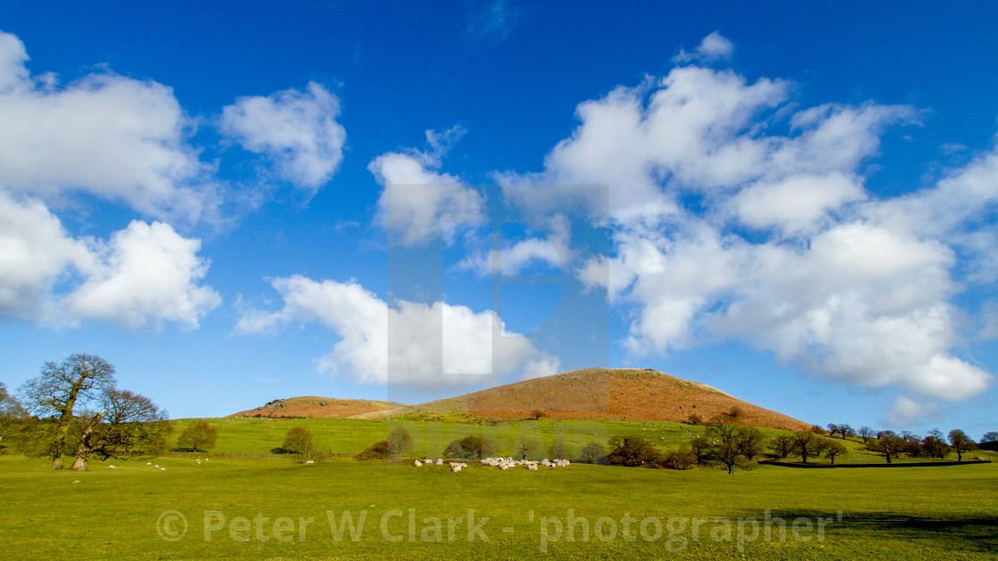"""""""Dales Hill view from River Wharfe, Bolton Abbey"""" stock image"""