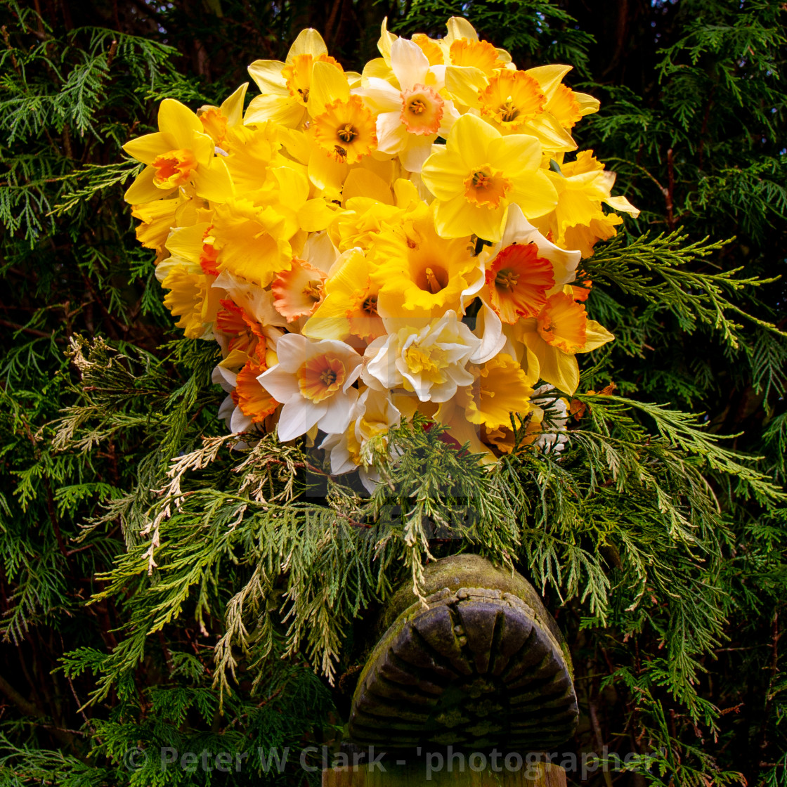 """A Bouquet of Daffodils in an Old Boot"" stock image"