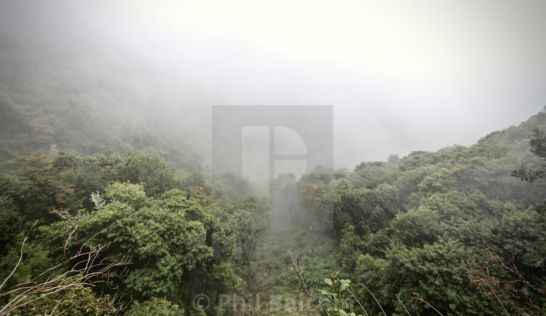 """Misty mountain trees"" stock image"