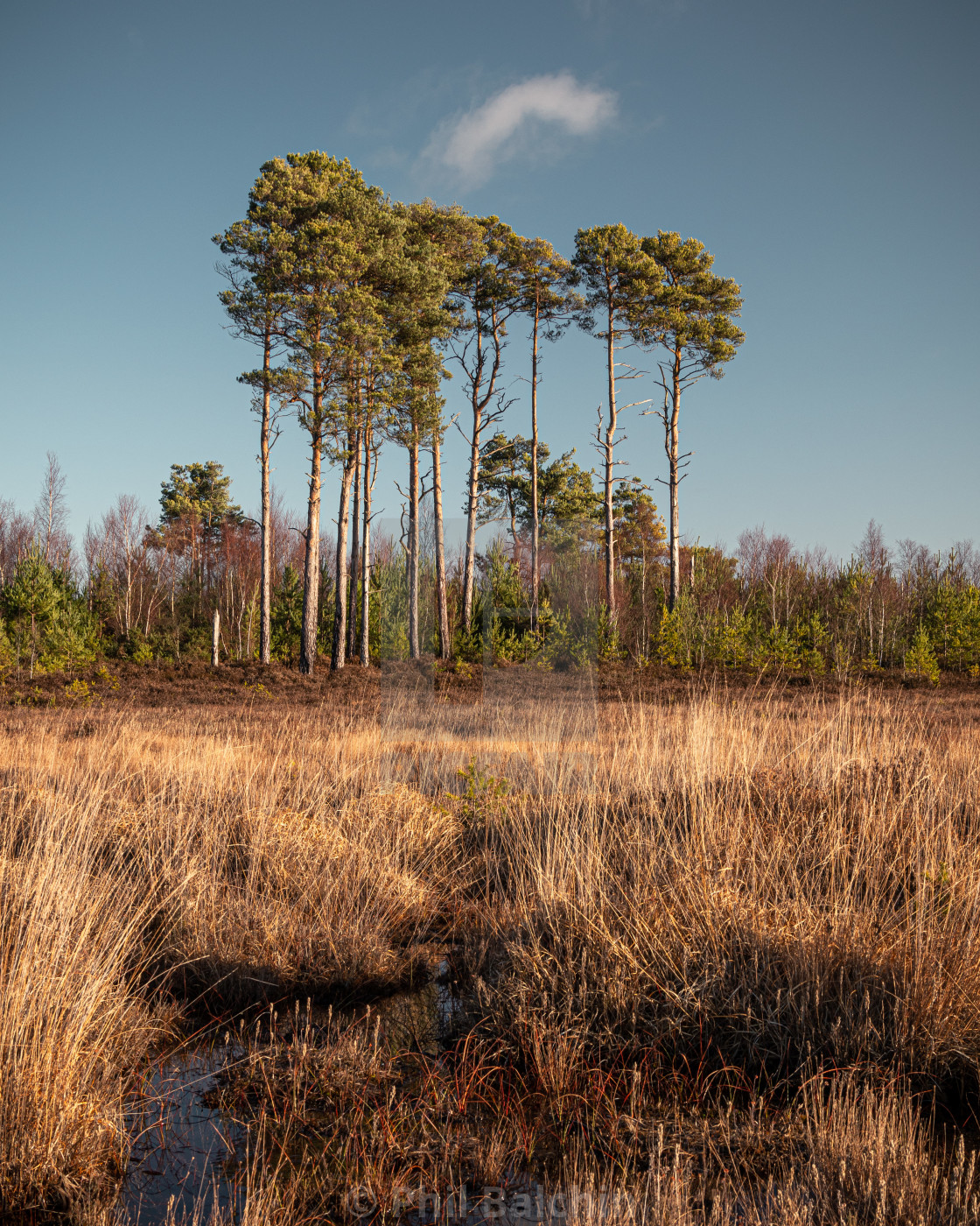 """Thursley Nature Reserve"" stock image"