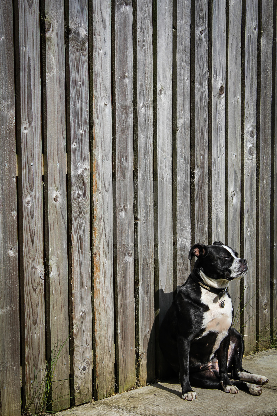 """""""Fence Security"""" stock image"""