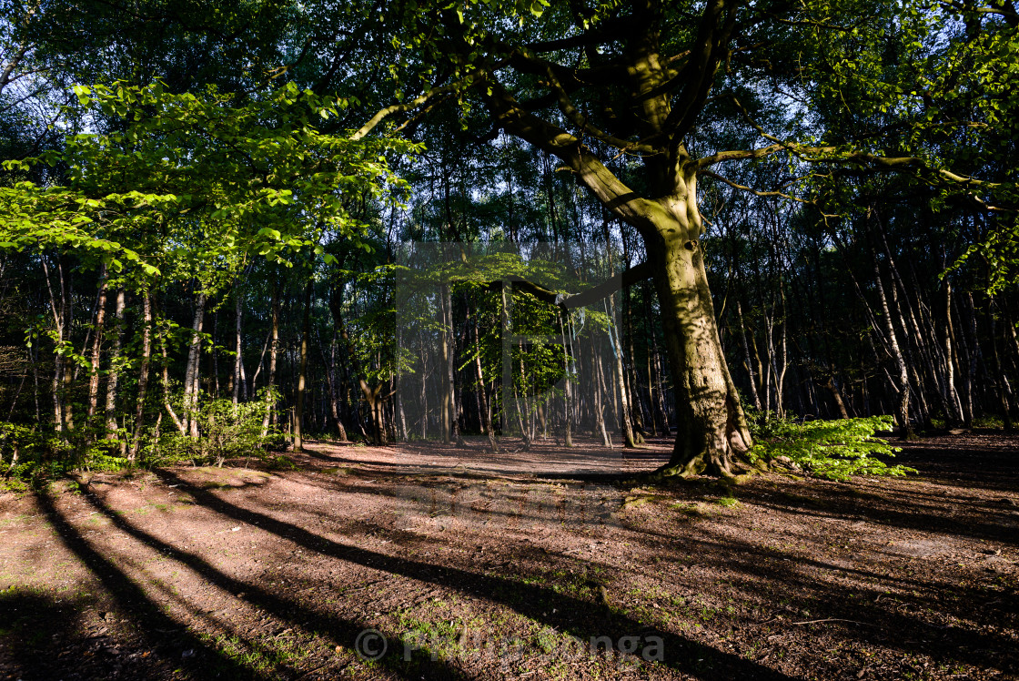 """Ireland Wood, Leeds"" stock image"