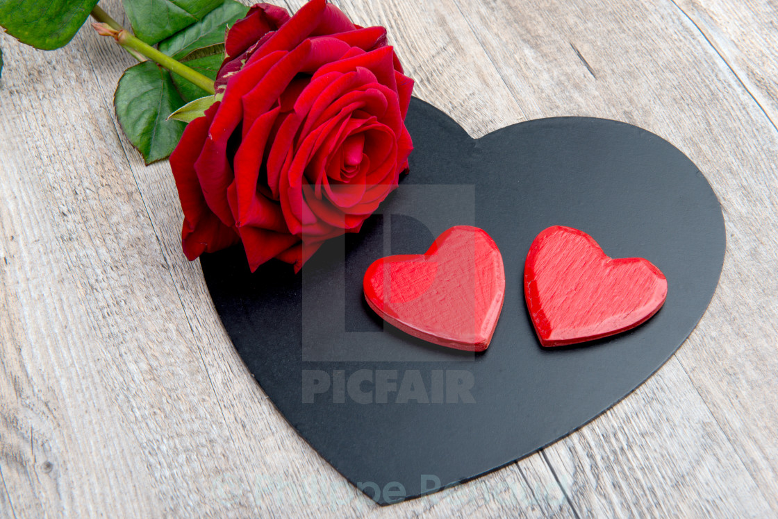 hearts and rose for the feast of Valentine's day - License