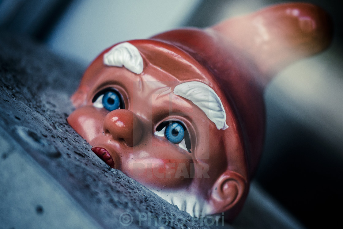 """""""Garden Gnome Surfacing from Concrete Block"""" stock image"""