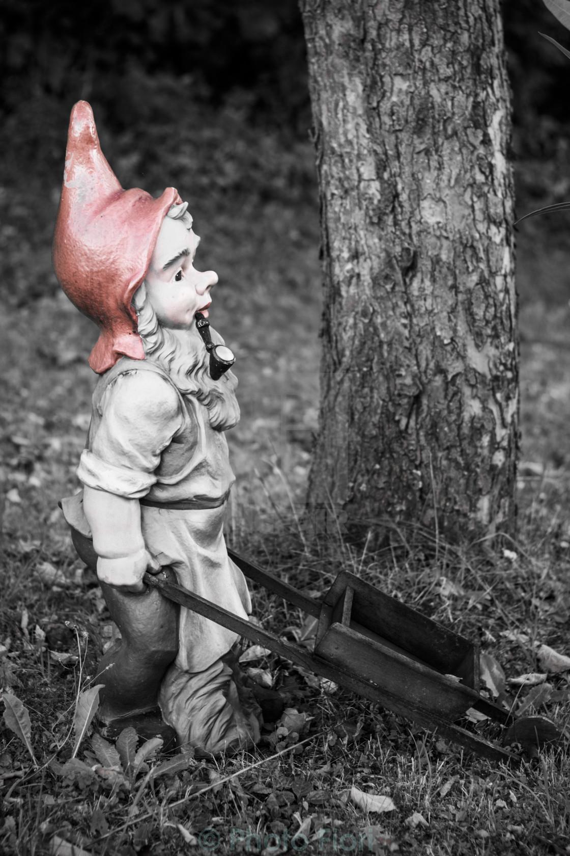 """""""Garden Gnome Pushing a Wheelbarrow"""" stock image"""