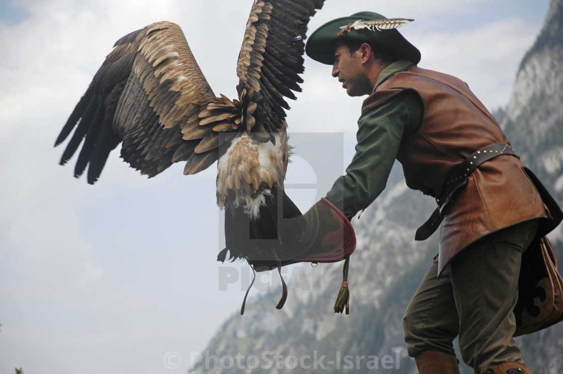 Birds Of Prey Show License Download Or Print For 9 92 Photos Picfair