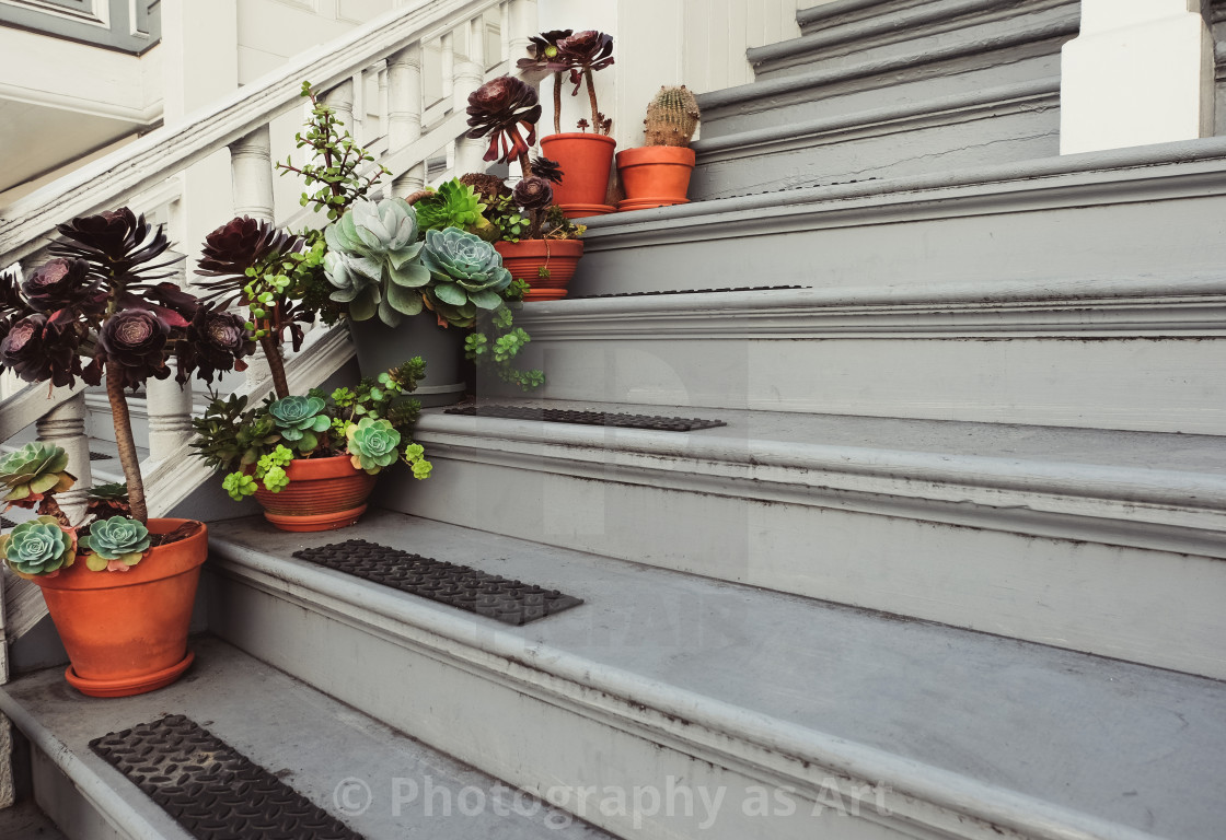 """Flowers in pots on the wooden steps"" stock image"