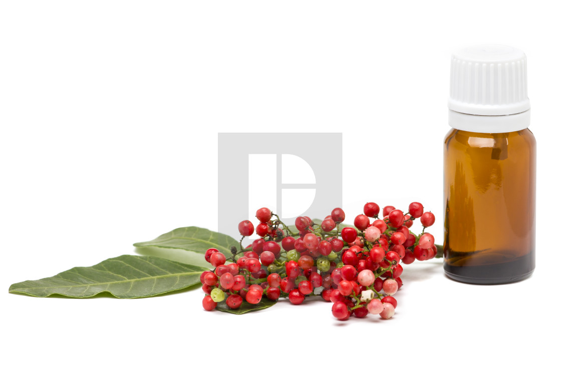 Mastic essential oil isolated on white background  - License