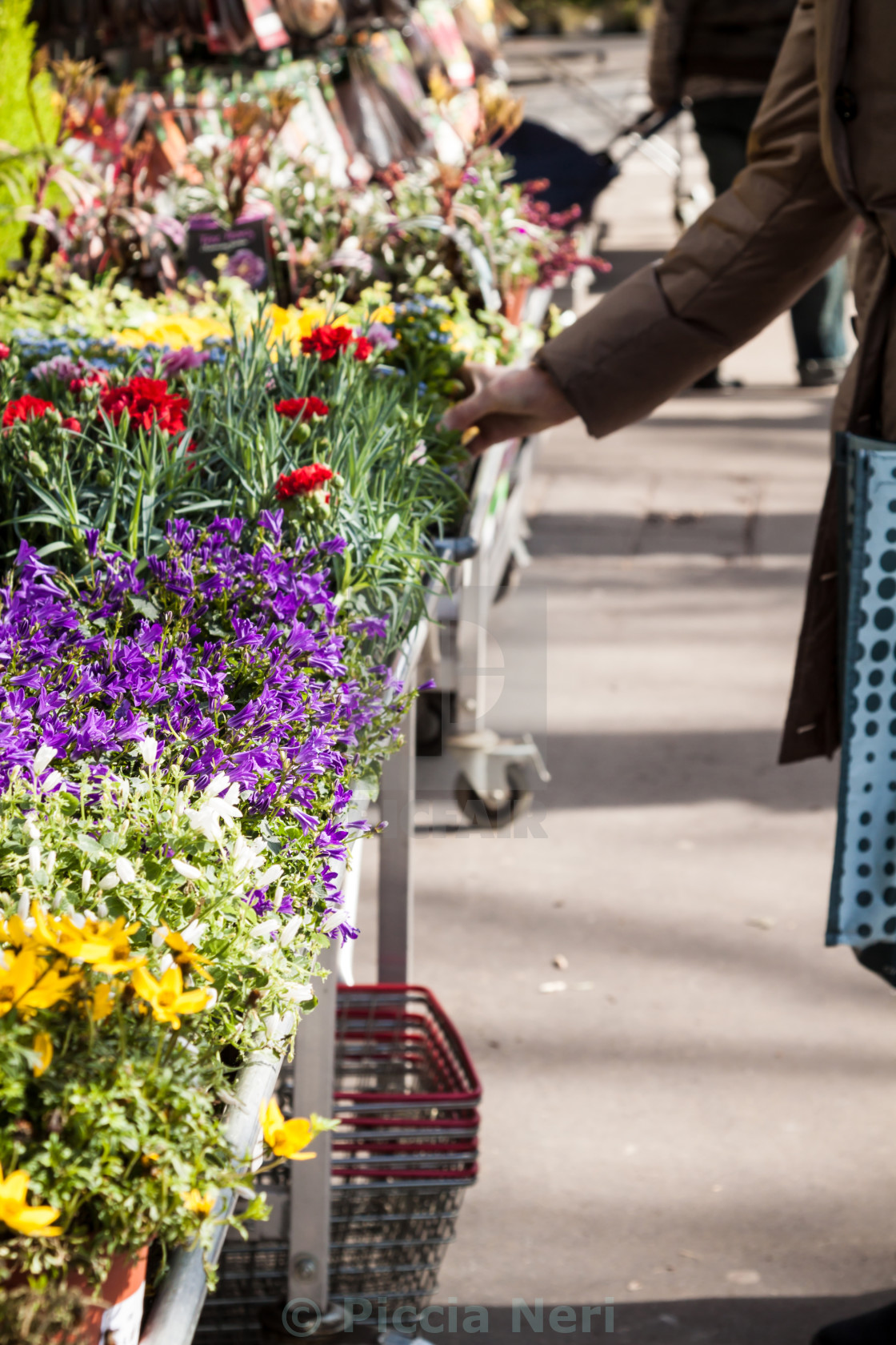 Beautiful Spring Flowers For Sale At Street Market Focus On Purple