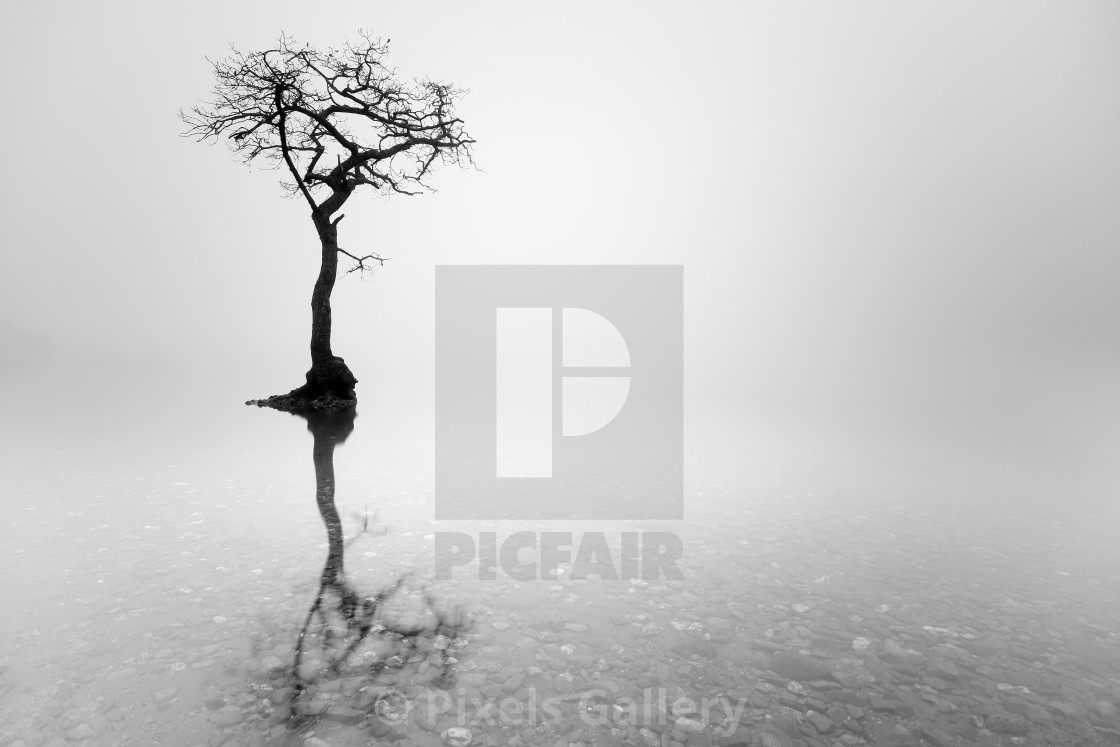 """Misty Tree"" stock image"