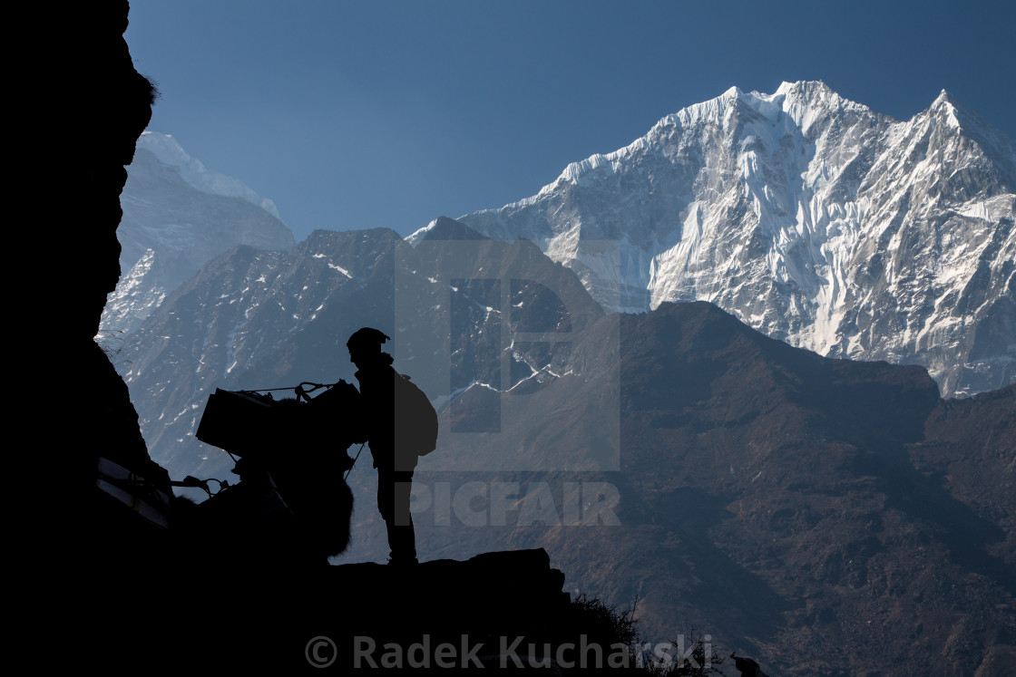 """A Sherpa man fixing the load on a yak with Thamserku peak as a backdrop"" stock image"