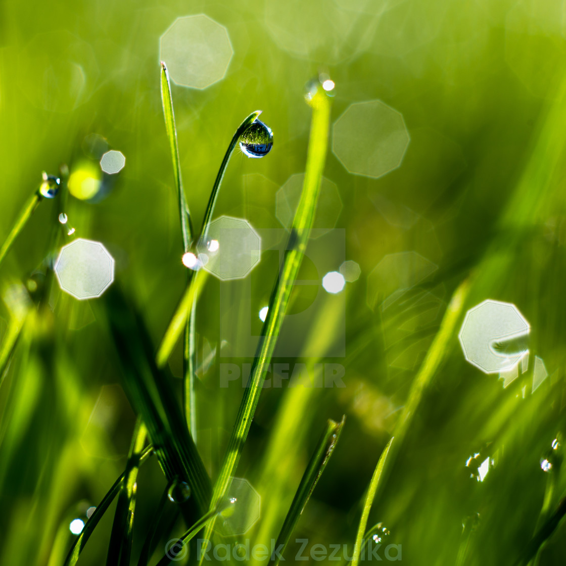 """Morning dew"" stock image"