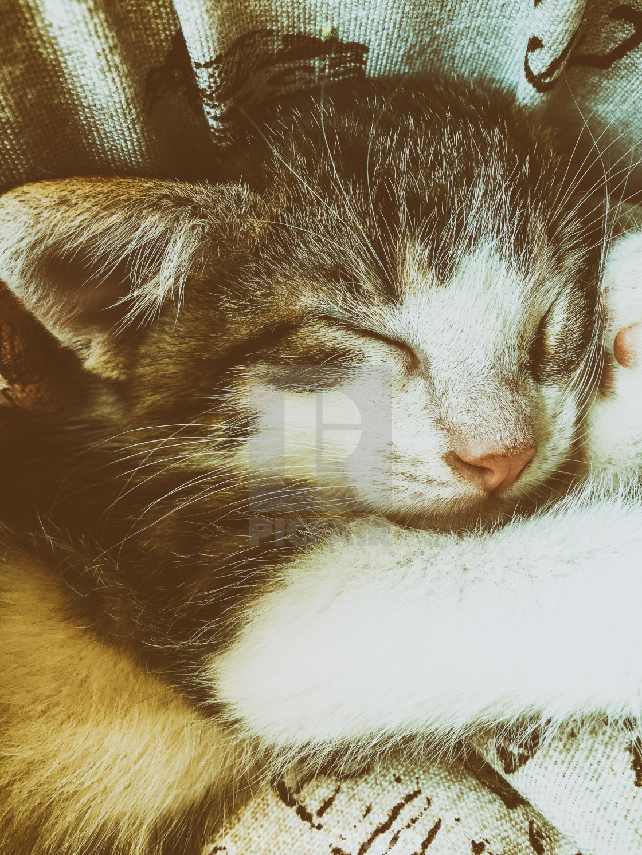 """Baby Tabby Cat Sleeping In Kitty Basket"" stock image"