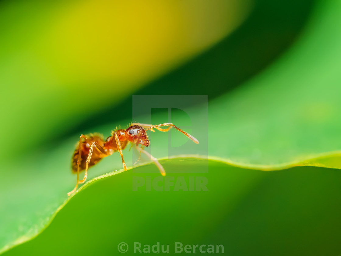 """Brown Ant Close Up Details"" stock image"