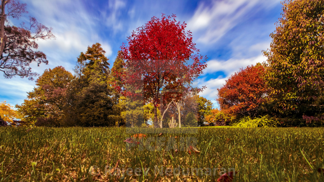 """Autumn scenes from the garden-1"" stock image"
