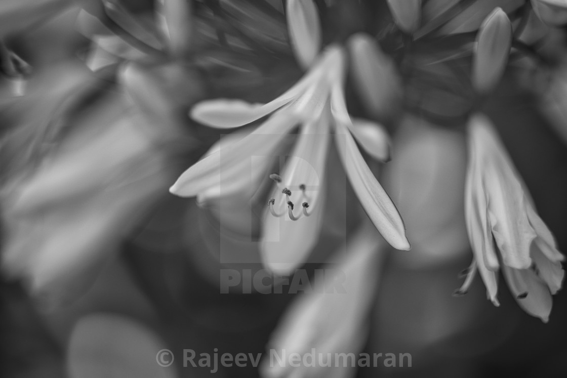 """Flowers in Monochrome"" stock image"