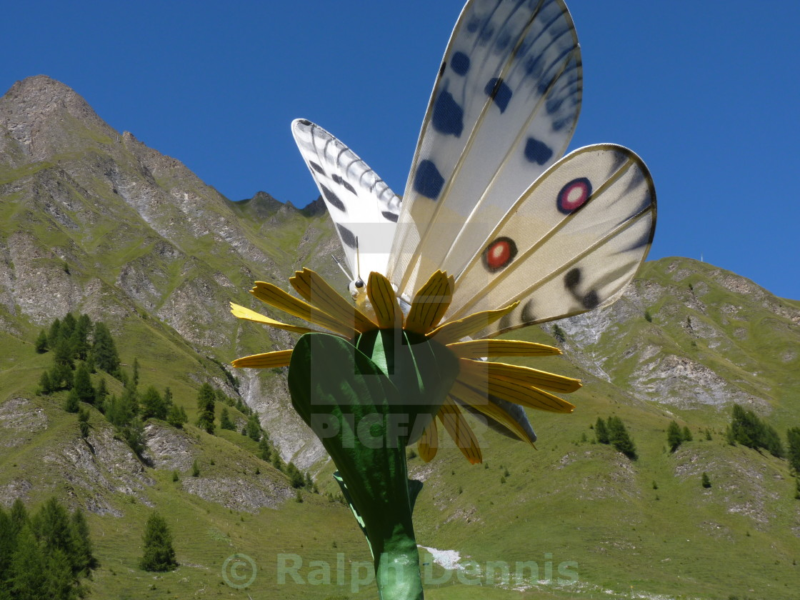 """""""Mountain Butterfly"""" stock image"""