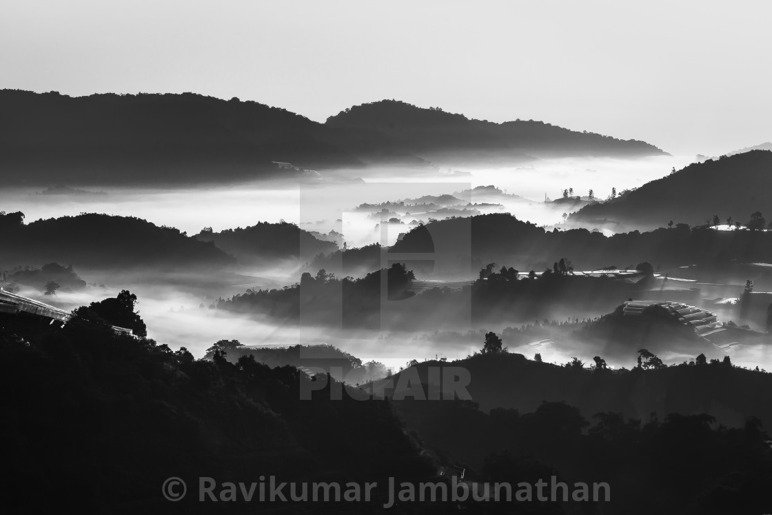 """Cameron Highlands"" stock image"