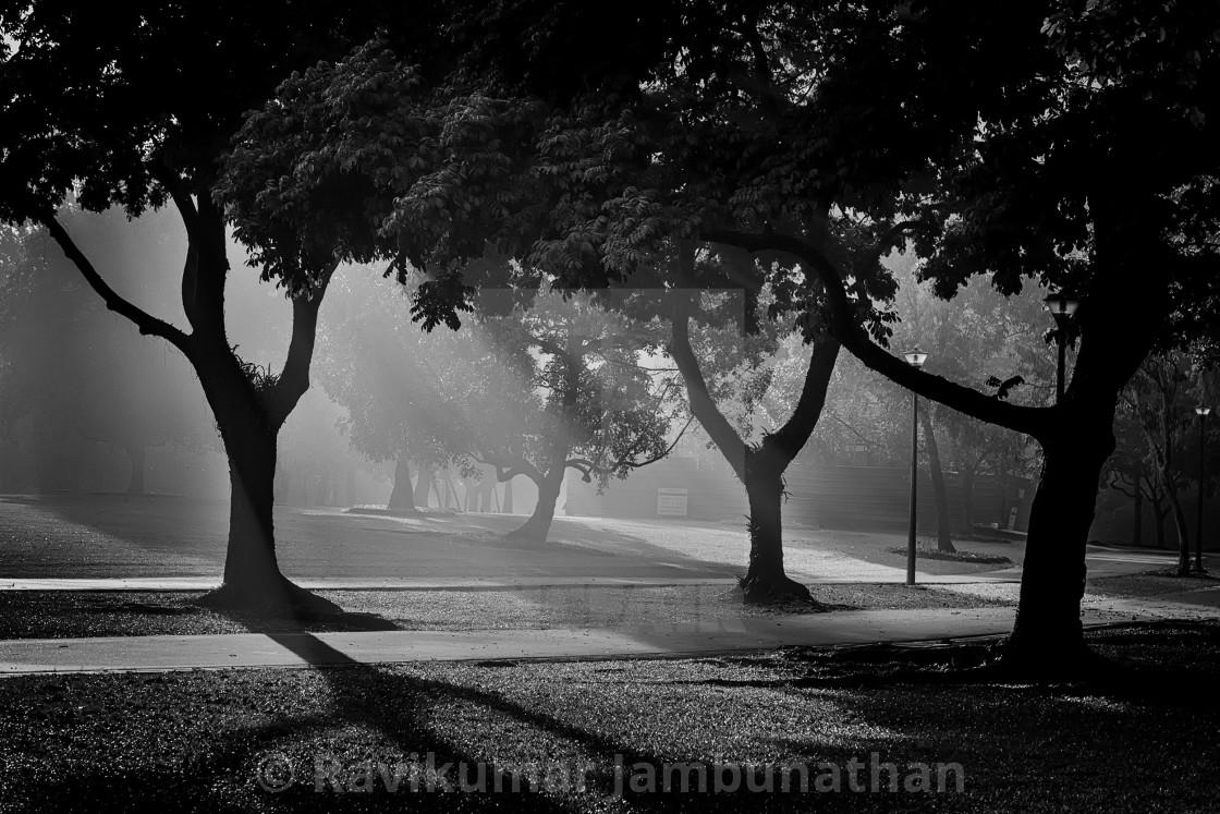 """Mist, Light & Trees - Study 5"" stock image"