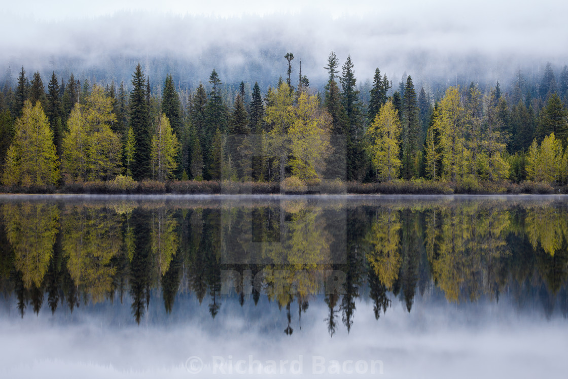 """Lakeshore Tree Reflection"" stock image"