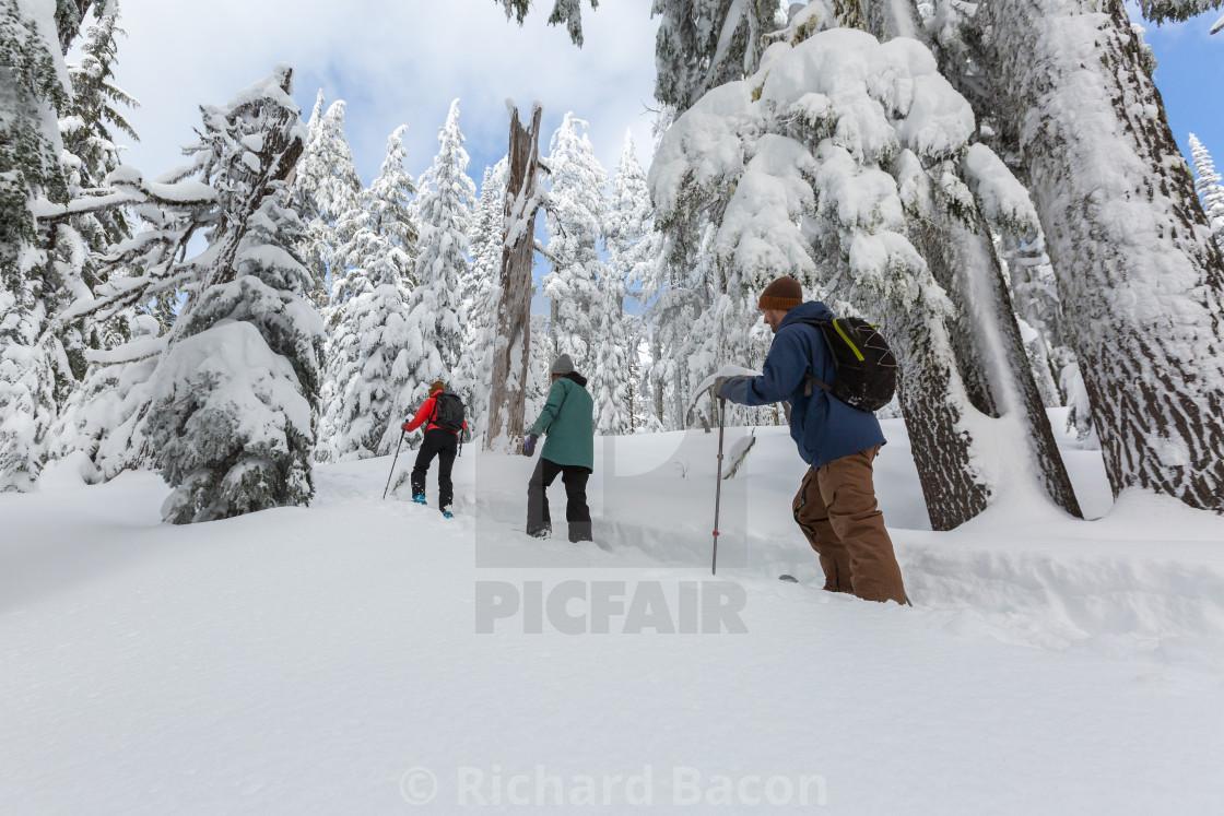 """Snowshoe Hikers"" stock image"