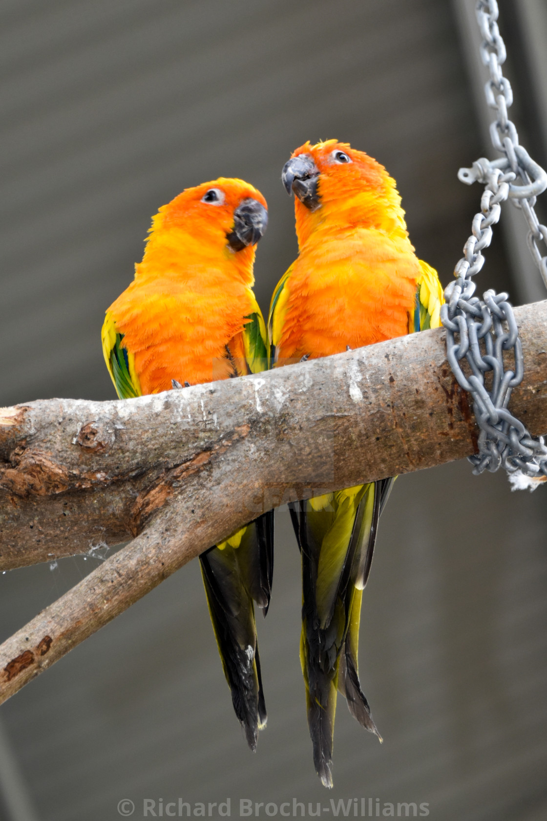 """""""Parrot-dise"""" stock image"""