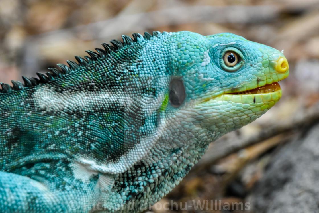 """""""Reptile"""" stock image"""