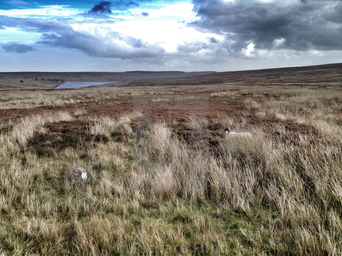 """Moorland in County Durham, UK"" stock image"