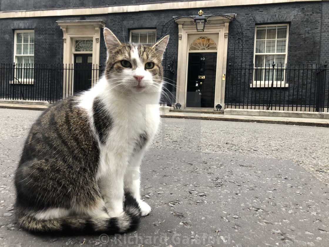 """Larry the Downing Street Cat"" stock image"
